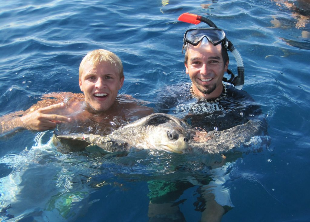 Sea Turtle Internship